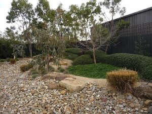 River Pebbles And Eucalypts