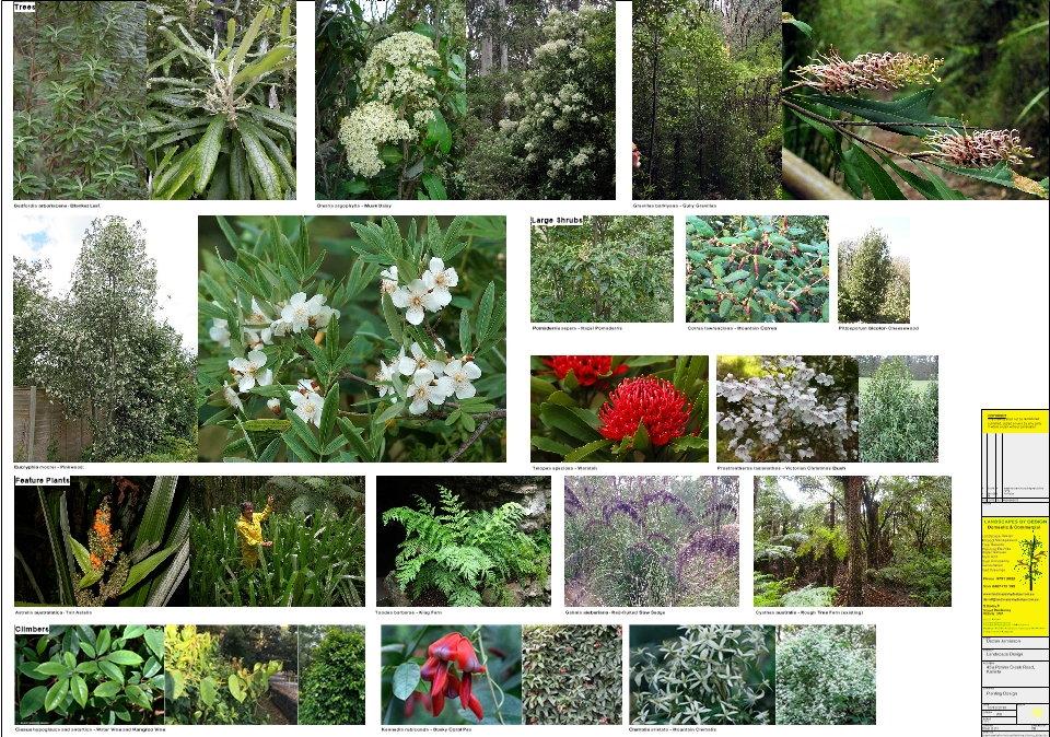 Kallista Plants