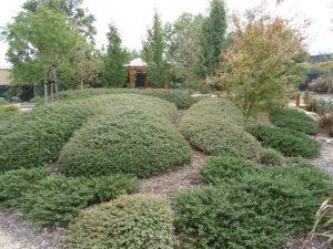 Clipped Garden