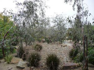 Pebbles Trees Boulders