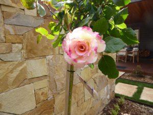 Roses In Landscape
