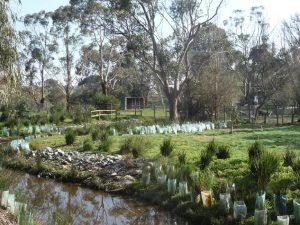 Landscaping Wetlands 02