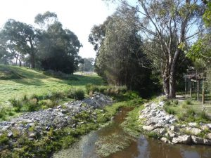 Landscaping Wetlands 03