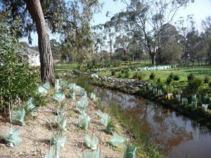 Landscaping Wetlands 04