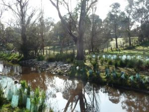 Landscaping Wetlands 05