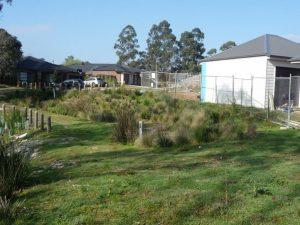 Landscaping Wetlands 06