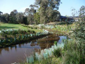 Landscaping Wetlands 08