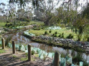 Landscaping Wetlands 09