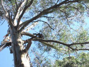 08 Hazardous Tree