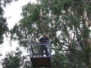 11 Hazardous Tree Removal