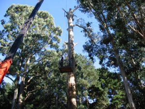 12 Crane For Dangerous Tree
