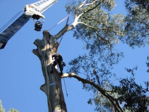19 Dangerous Tree Removal