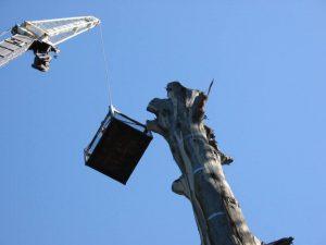 20 Hazardous Tree Removal