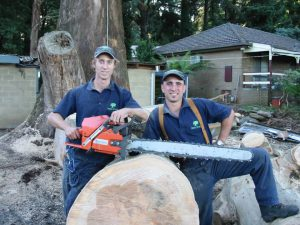 25 Hazard Tree Removal