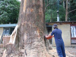 26 Hazard Tree Removal