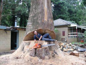 28 Hazardous Tree Removal