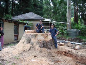 30 Large Hazardous Tree