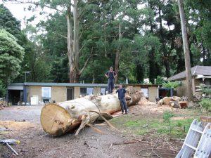 34 Arborist Reports Melbourne
