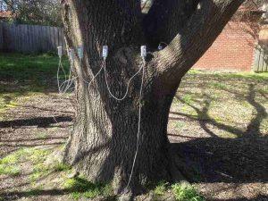 Dangerous Old Oak
