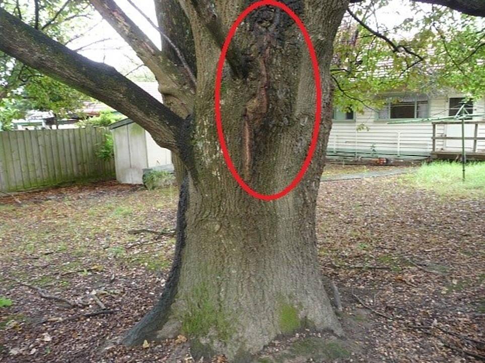 Dangerous Tree Assessment