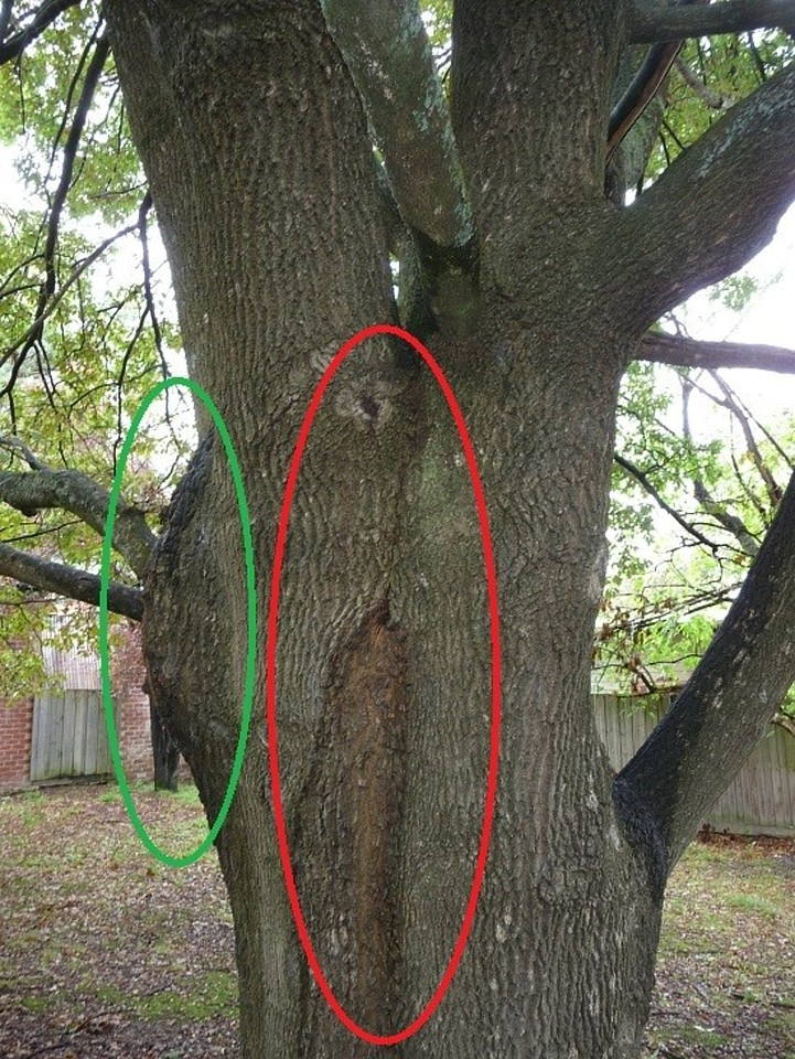Hazardous Tree Assessment
