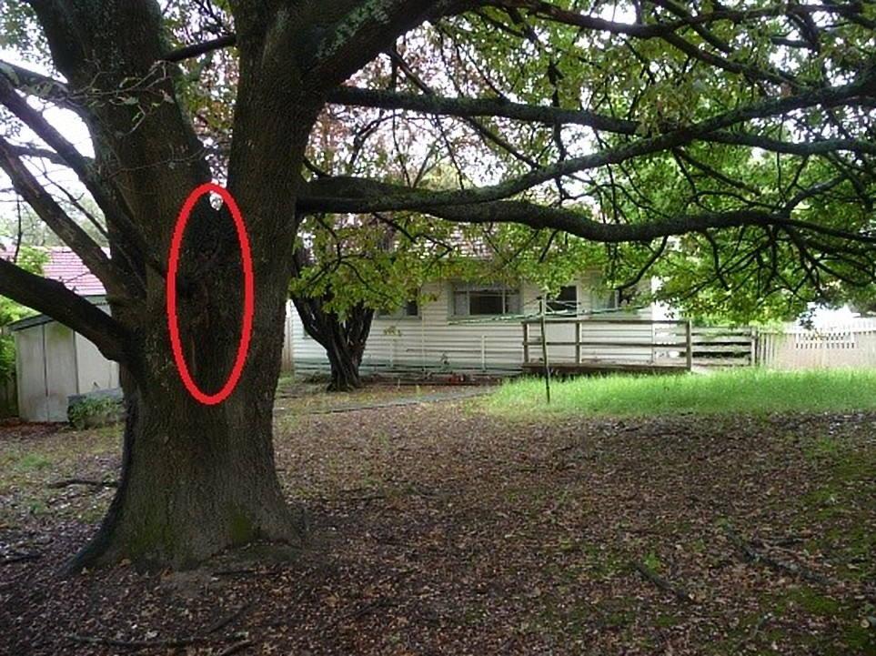 Hazardous Tree Croydon