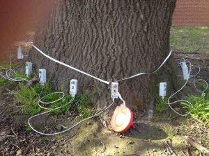 Tree Decay 10 Cm