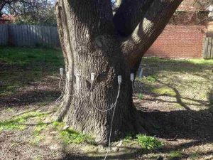 Tree Decay 70 Cm