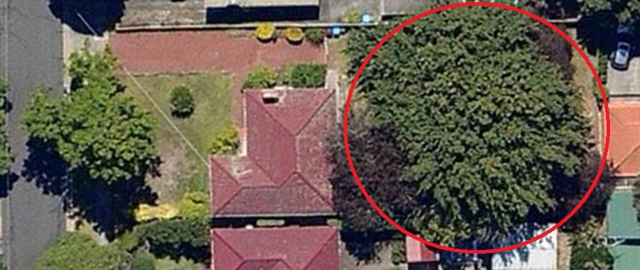 Tree Report Croydon